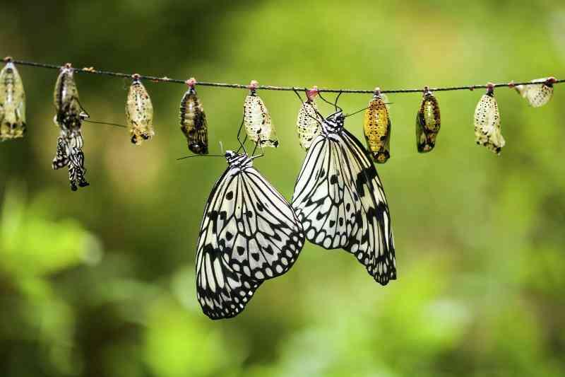 Comment faire pour Démarrer un élevage de Papillons