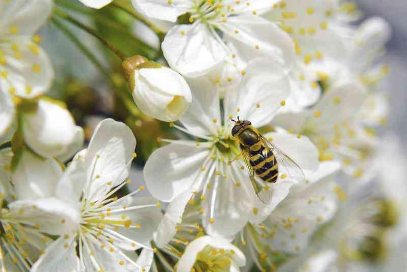 Comment Enseigner aux Enfants au Sujet de la Pollinisation