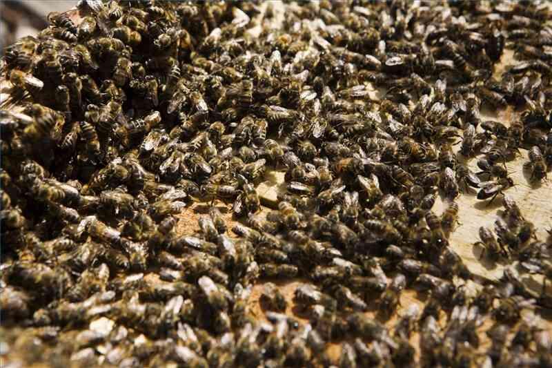 comment se d barrasser d 39 une ruche d 39 abeilles. Black Bedroom Furniture Sets. Home Design Ideas