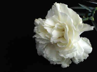 comment faire des fleurs absorber de l 39 eau color e. Black Bedroom Furniture Sets. Home Design Ideas