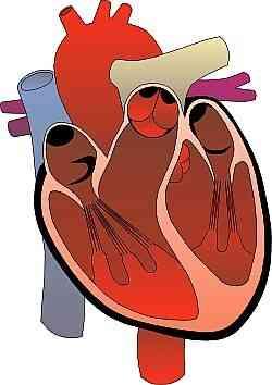 Comment Naturellement Guérir les Maladies du Cœur