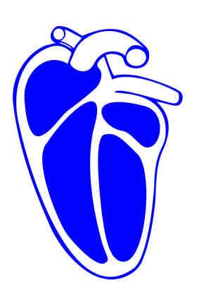 Quels Sont les Quatre Propriétés du Tissu Cardiaque?
