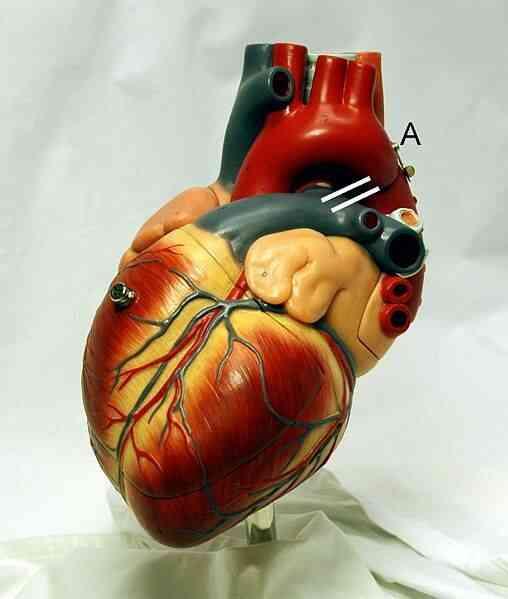 Neurocardiogenic Syncope Traitement