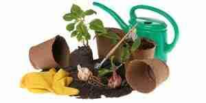 Cultiver des plantes dans la salle de classe