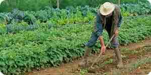 Concevoir, planifier et cultiver un potager