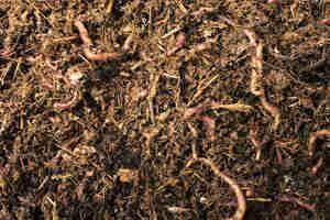 Faire un bac à compost: le compost maison des bacs