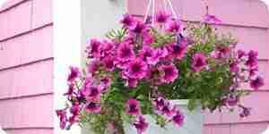 Faire des paniers de fleurs suspendus