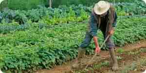 Faire des légumes biologiques de la plante alimentaire