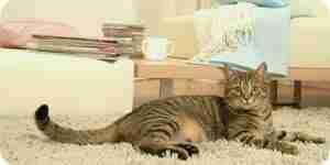Bâtiment chat condos et de maisons: des plans de meubles