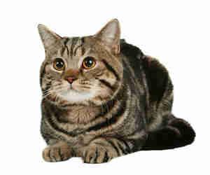 chat mites d