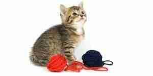 Faire des jouets pour les chats: le meilleur des jouets de chat
