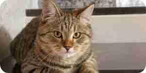 Arrêter le chat de pulvérisation de problèmes: les informations sur les chats