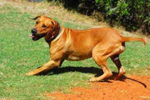 construction de course de chien