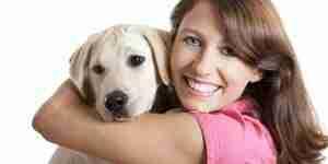 Soins pour le labrador retriever chiens et de chiots