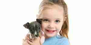 Soins pour le rat terriers: rat terrier chiens