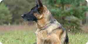 Arrêter agressif de comportement de chien: chien de la formation des conseils