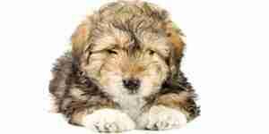Traiter les calculs de la vessie canine