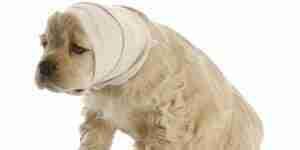 Traiter de chien de crises: les soins du chien et de l