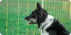 Installer une invisible barrière électrique pour chiens