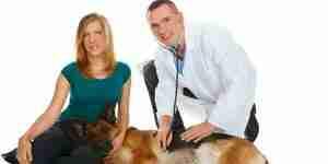 Les signes et les symptômes de chiens diabétiques