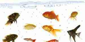 Acheter des poissons d