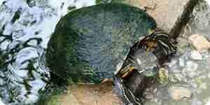 Faire de la nourriture de la tortue